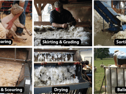 Wool Processing-Fleece to Bale